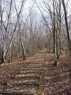 護摩壇山分岐からスカイタワーへの道.jpg